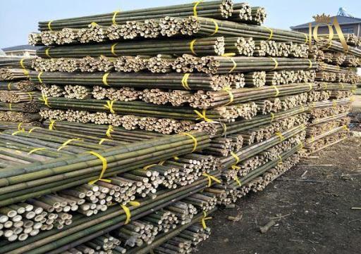 چوب درخت بامبو